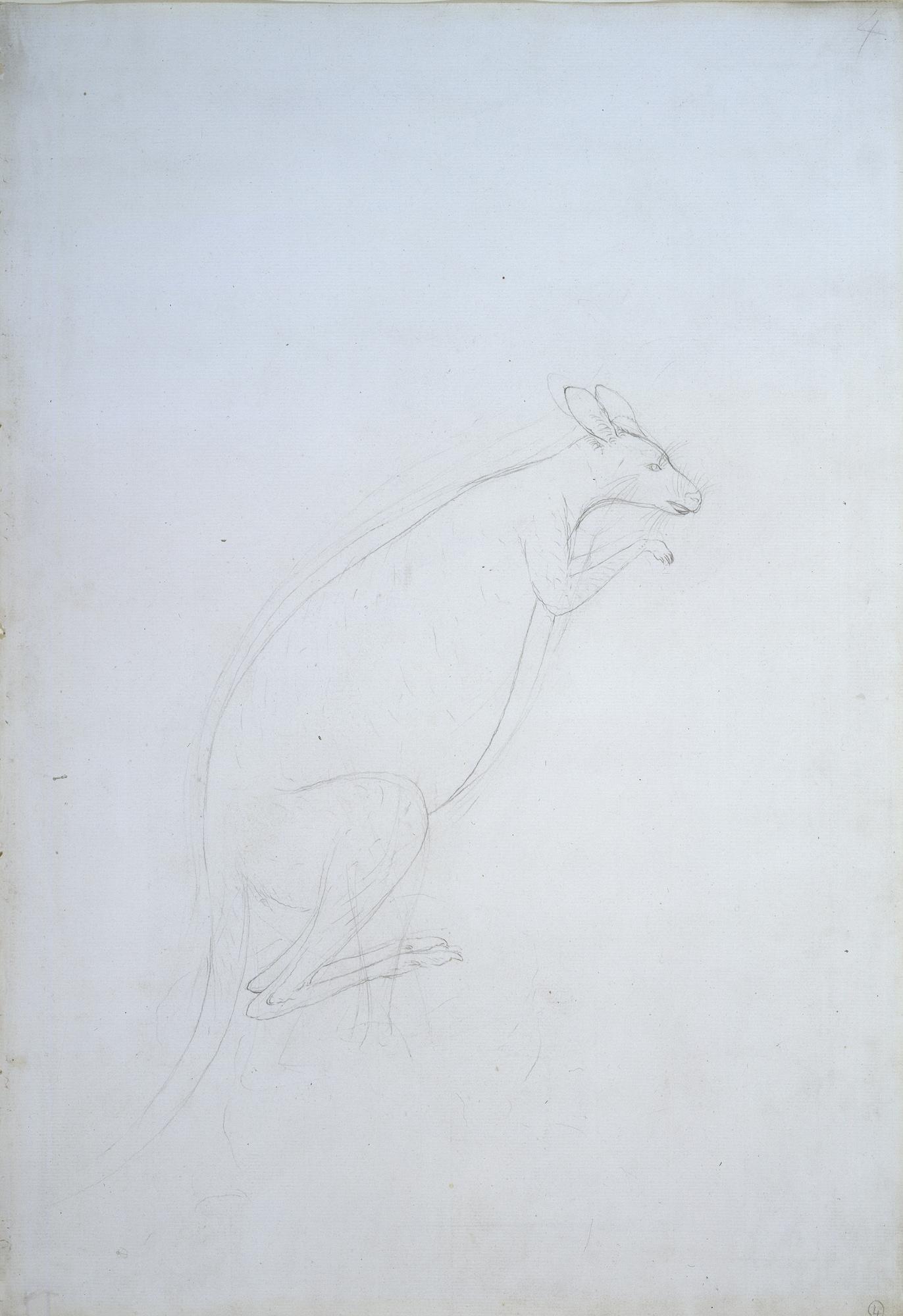 KangarooParkinson_009004_H.jpg